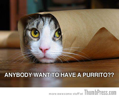 Purrito Caption Cats: 25 Hilarious Cat Photos Spiced up With Even Funnier Captions