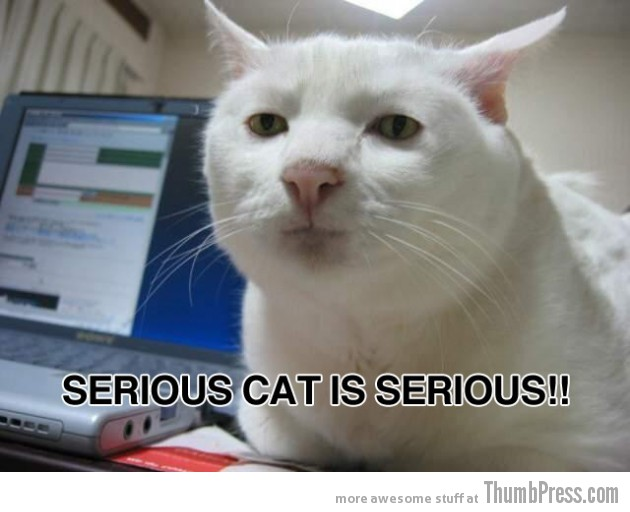 Serious cat is serious 630x512 Caption Cats: 25 Hilarious Cat Photos Spiced up With Even Funnier Captions