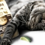 So wasted cat
