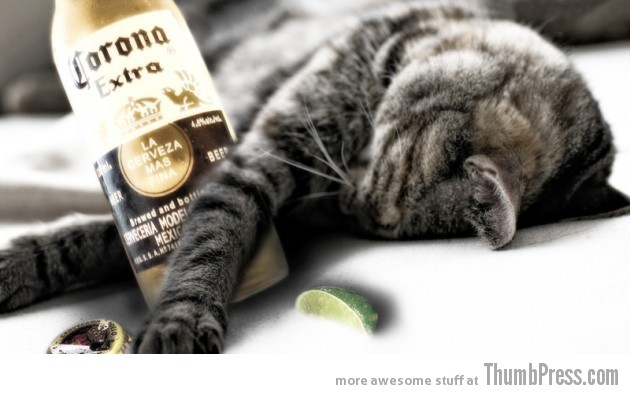 So wasted cat 630x394 Catoxication: 15 Hilarious Pictures of Cats Drinking or Drunk
