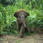 TINY ELEPHANT