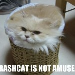 Trashcat