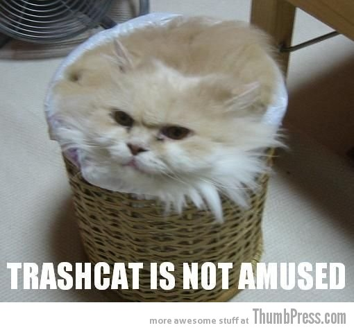  Caption Cats: 25 Hilarious Cat Photos Spiced up With Even Funnier Captions