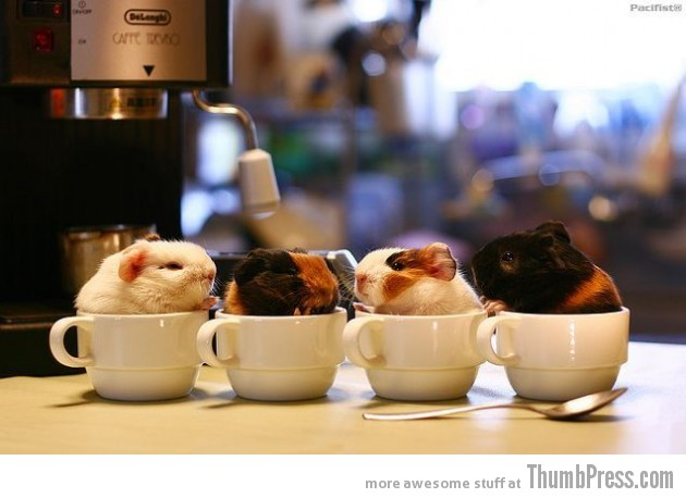 WARM CUPS 630x458 The Awwsome Cuties Are Here to Save The World (30 Heart Melting Pics)