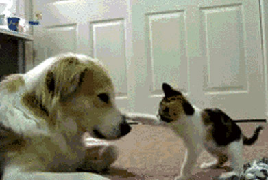 dogs-animals-gifs-thumb