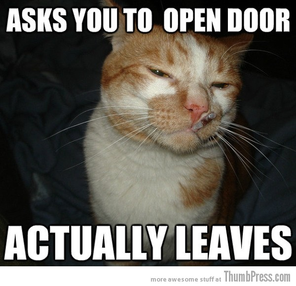 Cool Cat Craig 1  As Cool As It Gets: Awesome Cool Cat Craig Memes (16 PICS)