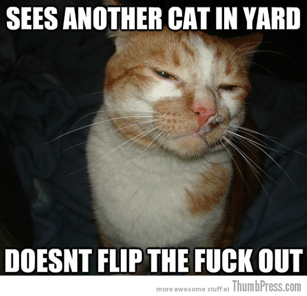 Cool Cat Craig 4 As Cool As It Gets: Awesome Cool Cat Craig Memes (16 PICS)