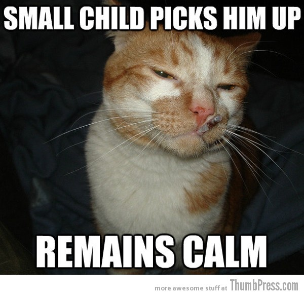 Cool Cat Craig 8 As Cool As It Gets: Awesome Cool Cat Craig Memes (16 PICS)