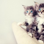 Kitty twins