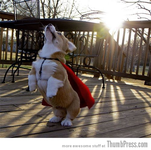 Super pup to the rescue