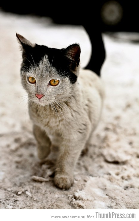 Awesome Eyes and fur