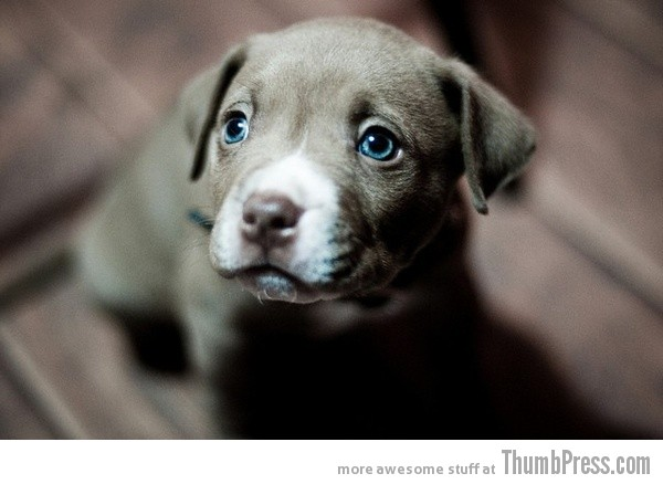 Blue Eyes 15 Pictures That Define The Cute Factor
