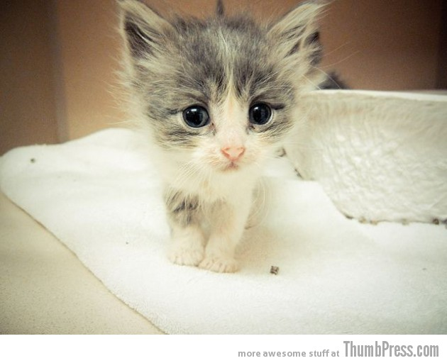Cute Kitty 630x512 15 Pictures That Define The Cute Factor