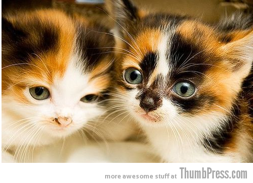 Cutest Kittens Ever