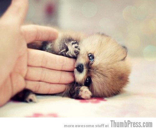 Dawwwww 15 Pictures That Define The Cute Factor