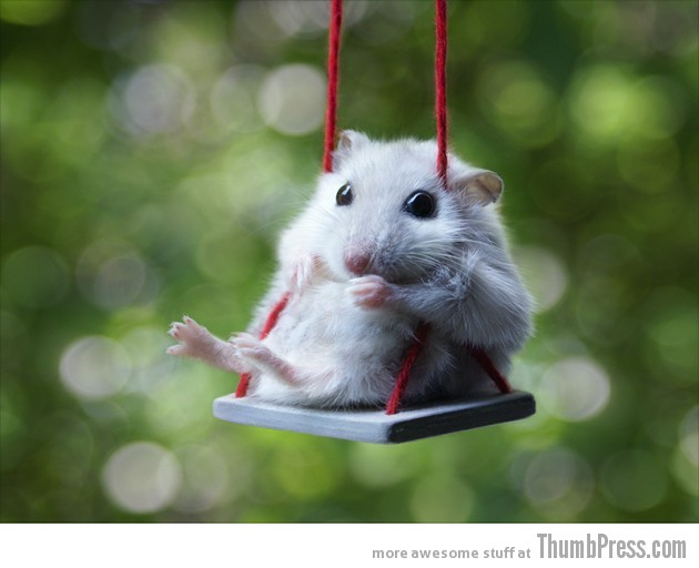 Hamster on a swing 630x512 15 Pictures That Define The Cute Factor