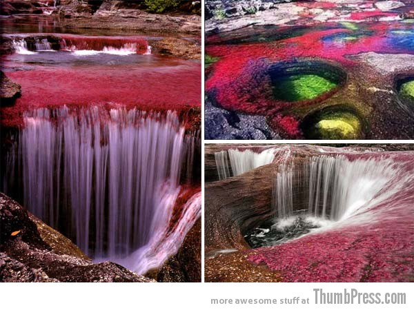 Canõ Cristales Colombia 1 10 Amazing Alien Like Places on Our World That Are From Another Planet