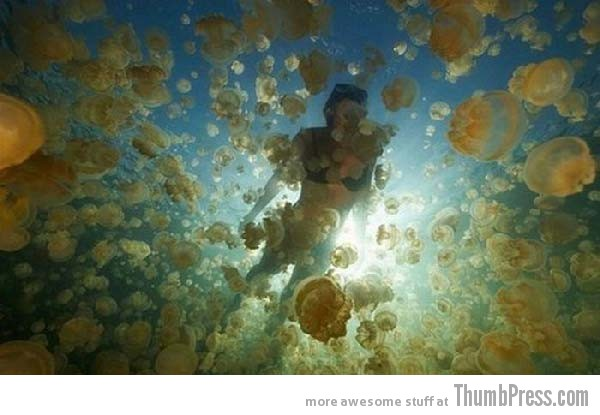 Jellyfish Lake 10 Amazing Alien Like Places on Our World That Are From Another Planet