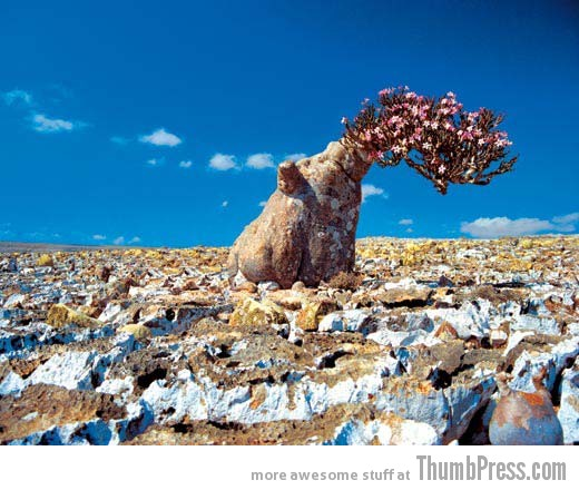 Socotra Island Yemen 1 10 Amazing Alien Like Places on Our World That Are From Another Planet