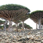 Socotra Island Yemen
