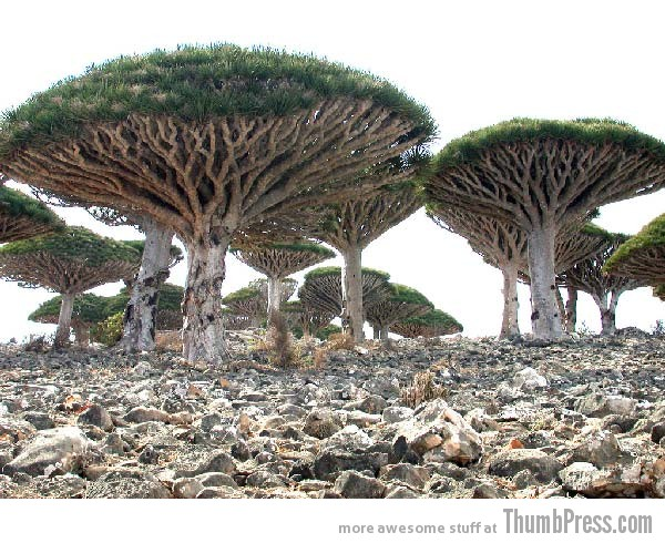 Socotra Island Yemen 10 Amazing Alien Like Places on Our World That Are From Another Planet
