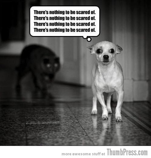 Funny Scared Quotes: Heart Melters: 25 Pictures Of Cute Animals To Make You Go AWWW