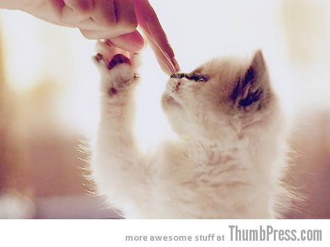 Attack of the Cuties 23 Heart Melters: 25 Pictures of Cute Animals to Make You Go AWWW