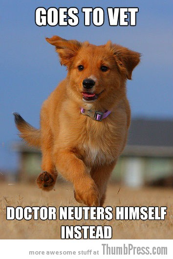 Goes to vet The Awesome & Adorable Adventures of Ridiculously Photogenic Puppy (10 Pics)