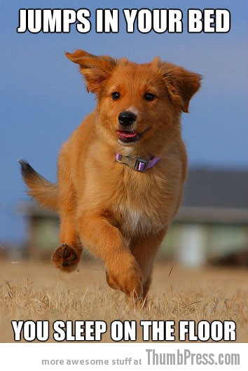 Jumps in your bed The Awesome & Adorable Adventures of Ridiculously Photogenic Puppy (10 Pics)