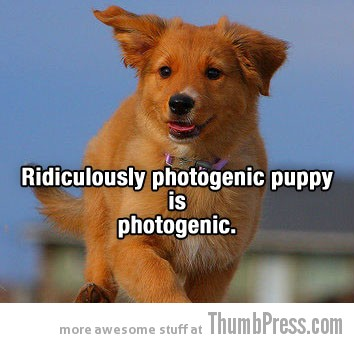 Photogenic-dog-thumb