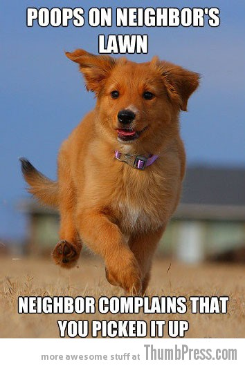 Poops on neighbors lawn The Awesome & Adorable Adventures of Ridiculously Photogenic Puppy (10 Pics)