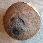 Sad Jewish Coconut