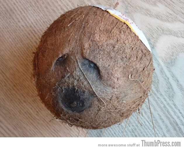 Sad Jewish Coconut 630x512 Theyre watching you!!   Finding Weird Faces in Inanimate Objects