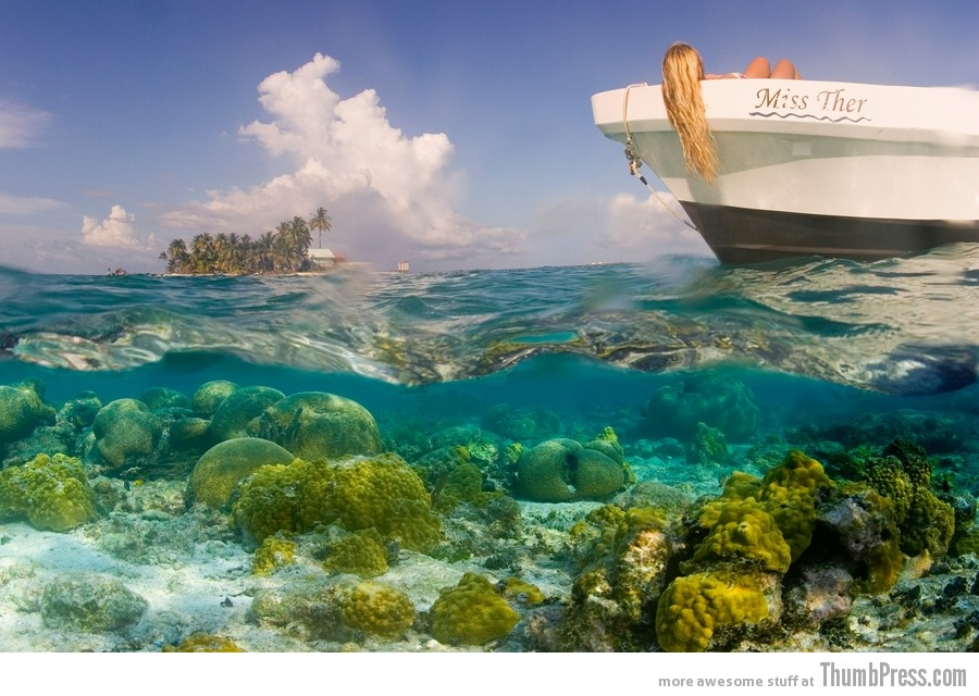 Coral Reefs of South Water Caye, Belize 1