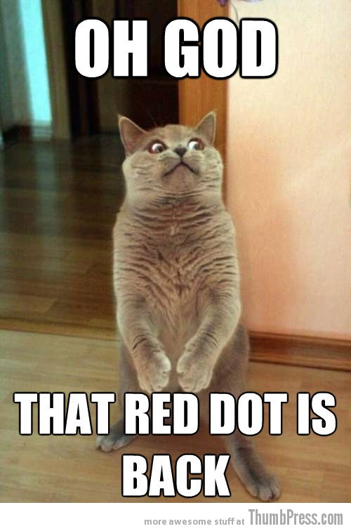 Red dot Hilarious Horrorcat: Sudden Realizations Hilariously Leave a Cat in Horror