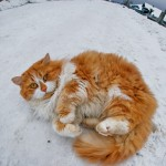Snow kitty