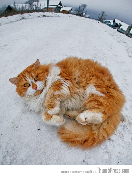 Snow kitty 15 Awesome Photographs of Animals Posing for The Camera