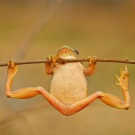 Stretchy Toad