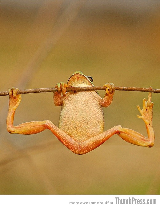 Stretchy Toad 15 Awesome Photographs of Animals Posing for The Camera