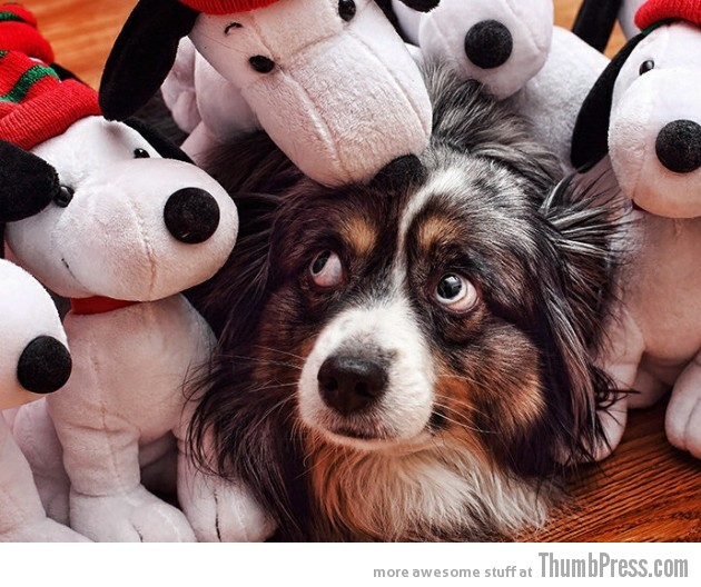 Stuffed toys.. NOPE 630x528 15 Awesome Photographs of Animals Posing for The Camera