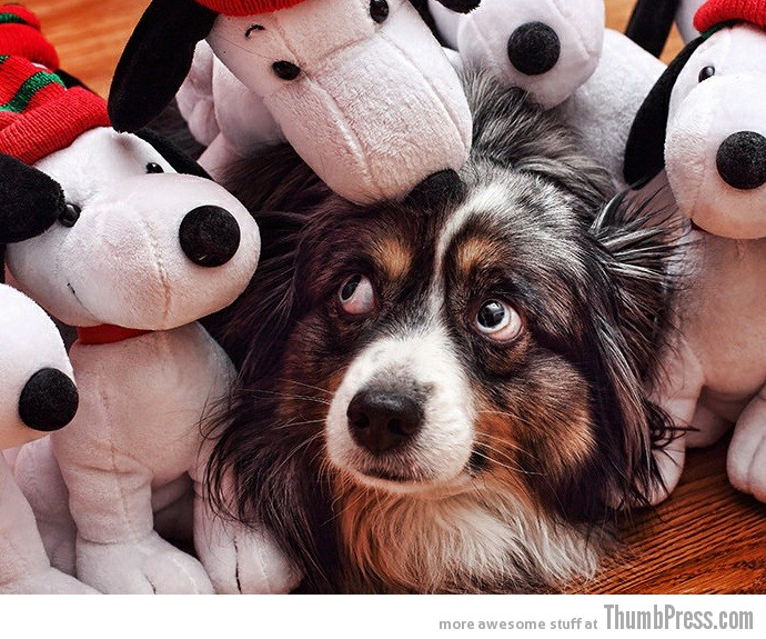 Stuffed toys.. NOPE