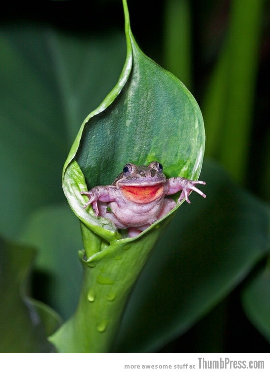 Surprise toad 15 Awesome Photographs of Animals Posing for The Camera
