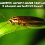 Surprising Facts 20