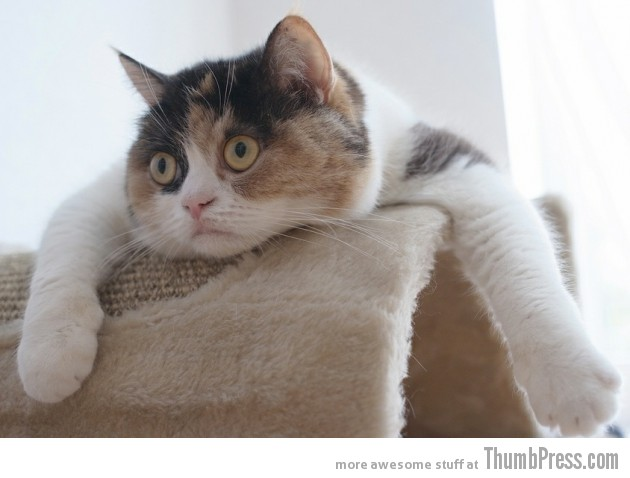 Tell me more about it 630x478 15 Awesome Photographs of Animals Posing for The Camera