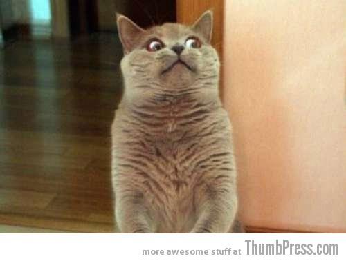 horror-cat-thumb