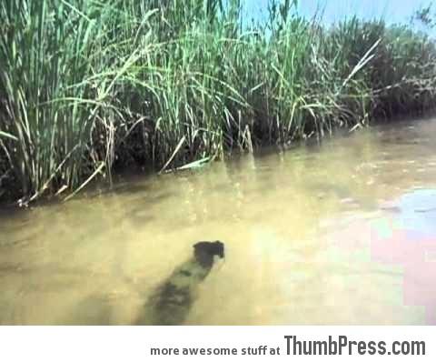 Bizarre spinning bark stuck in river