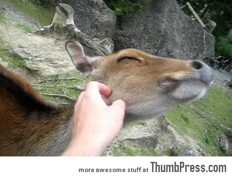 Such a friendly deer. Even Snow White would be jealous