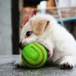 A tennis player puppy