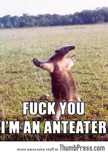 Anteater 21 Different Animal Memes: When Animals Unlock Level Awesome