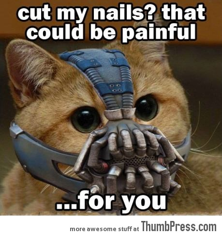 Bane Kitty strikes again